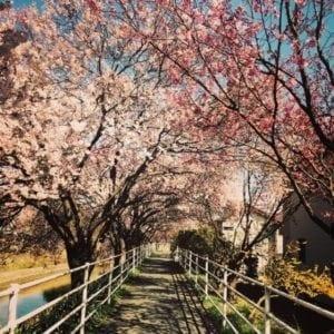solstizio di primavera