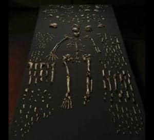 ossa dell'uomo di Naledi