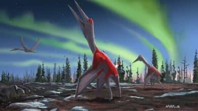 pterosauro drago volante del nord