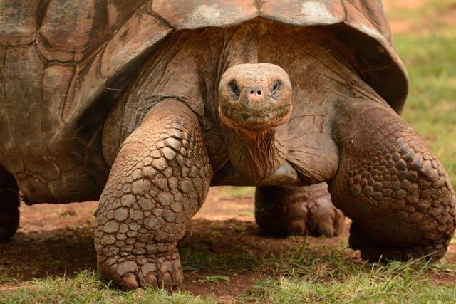 Charles Darwin mangiò 42 tartarughe giganti
